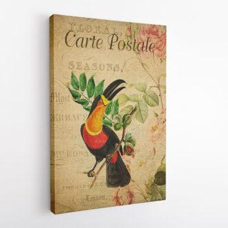 Toucan Vintage Postcard